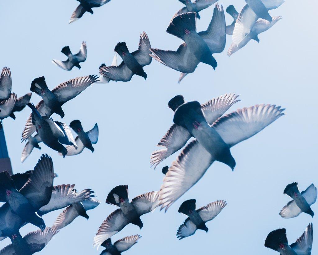 reduce-bird-collisions